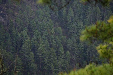 Лес в Гималаях
