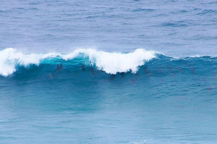 Дельфины сёрфят