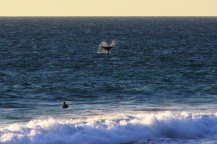 Брачные игры китов