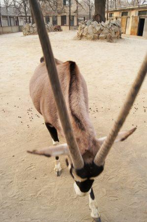 Пекинский зоопарк