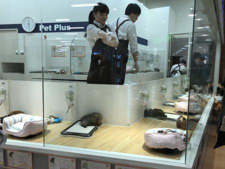 Зоомагазин в торговом центре Киото