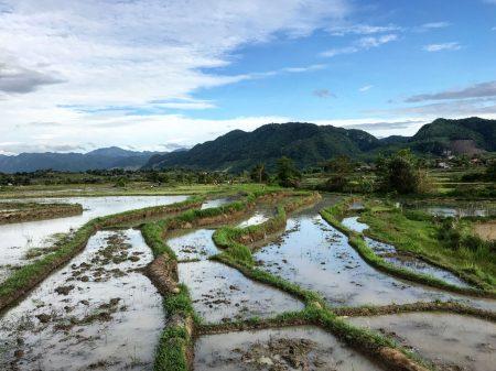 Рисовые поля, Лаос
