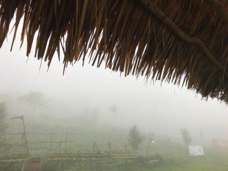 Клубничная ферма, Лаос