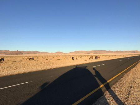 Дикие лошади пустыни Намиб