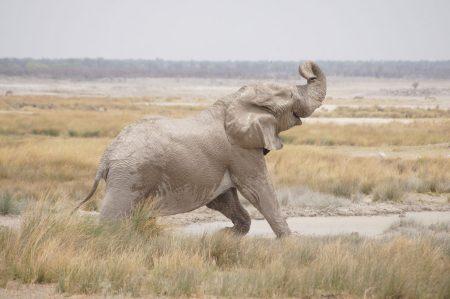 Etosha national park, Namibia. 2.11.2019