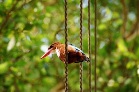 Kingfisher, India. 11.04.2019