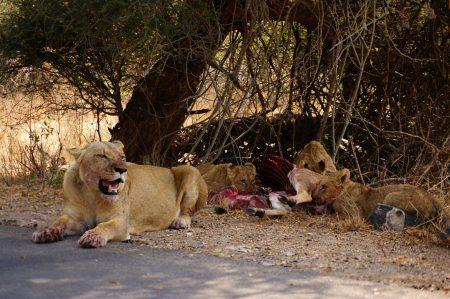 Kruger national park, South Africa. 8.08.2019
