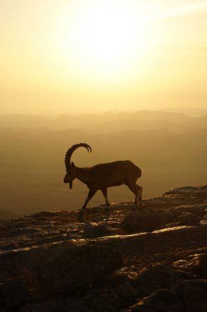Sunrise in Mitzpe Ramon, Izrael. 22.02.2020