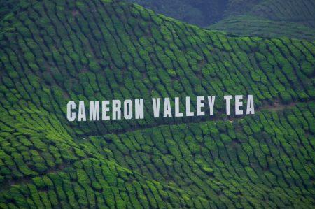 Cameron hightlands, Malaysia. 17.08.2018