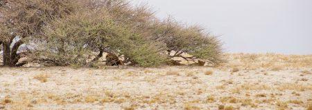 Etosha national park, Namibia. 1.11.2019