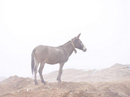 Трекинг в Непале. Вершина горы. Осел