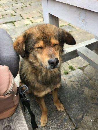 Собачка в Рингму, Непал