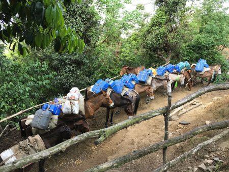 Парковка ослов, Гималаи