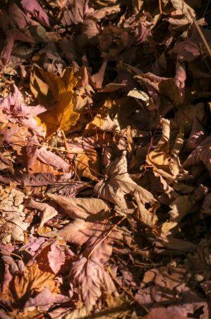 Осень в Абхазии